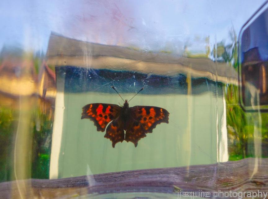 Butterfly-in-a-Jar